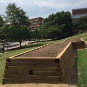 These beds were built to help support the butterfly and bees populations